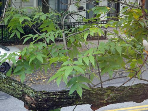 tree10_4c.jpg