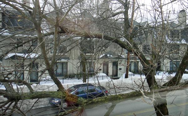 tree2_8b.jpg