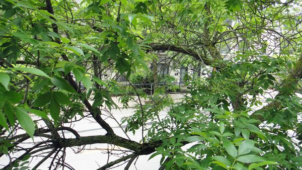 tree6_10.jpg