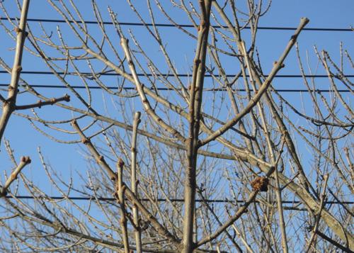 tree_2_15.jpg