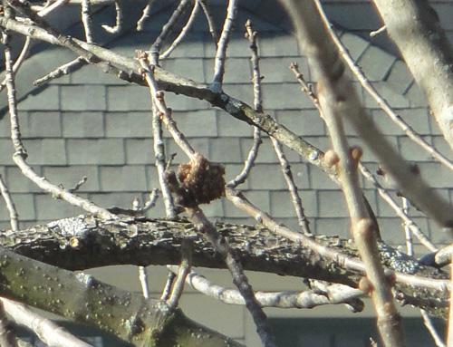 tree_2_22_burrs2.jpg