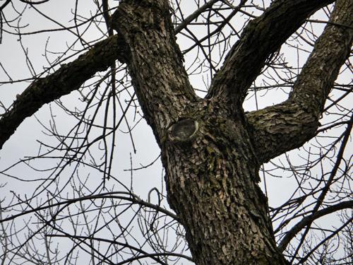 tree_3_1trunk.jpg