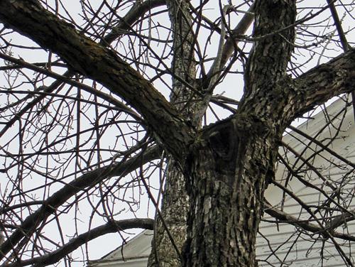 tree_3_1trunk2.jpg
