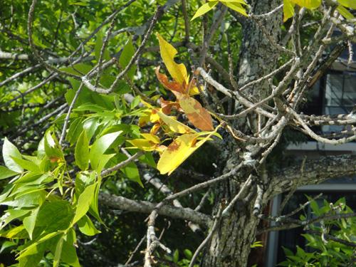 tree_leaf9_22.jpg