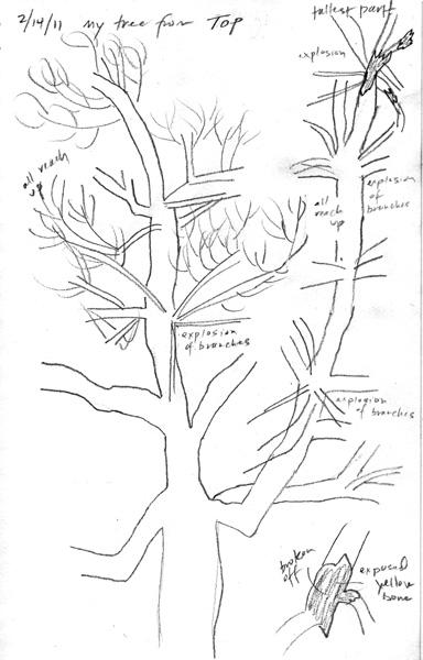 treed_2_14.jpg