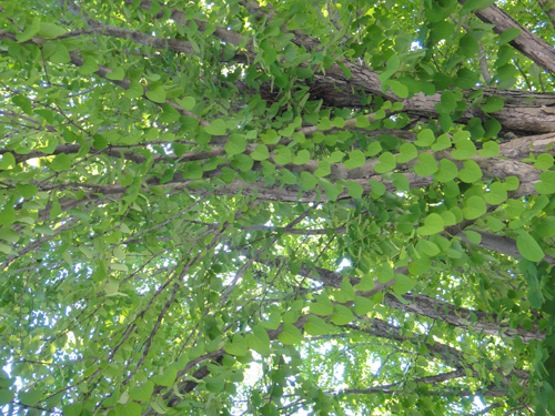 trees5_21a.jpg
