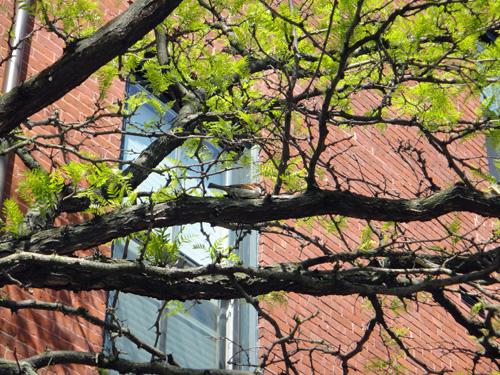 trees5_21e.jpg