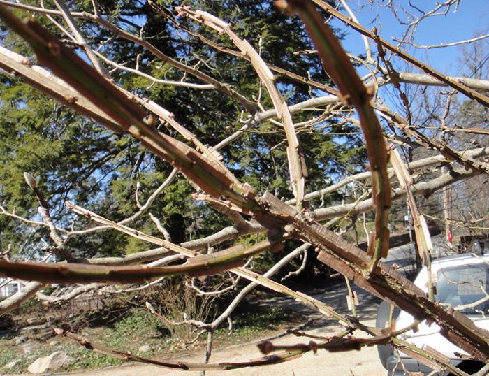 http://treeblog.hansels.net/treeblog/weird_plant_B.jpg